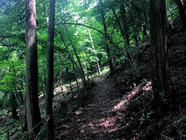 大茂山 登山道