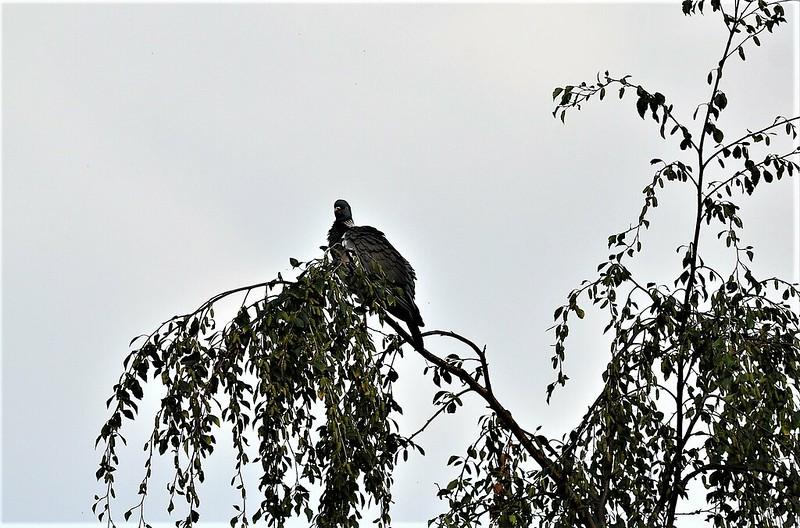 Big Bird 06.07 (10)