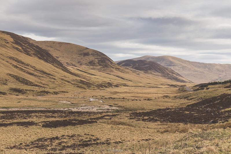 Troupeau de Cerfs - Old Military Road - Scotland 2017