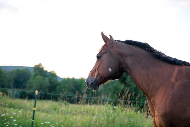 20180709 Horses_12