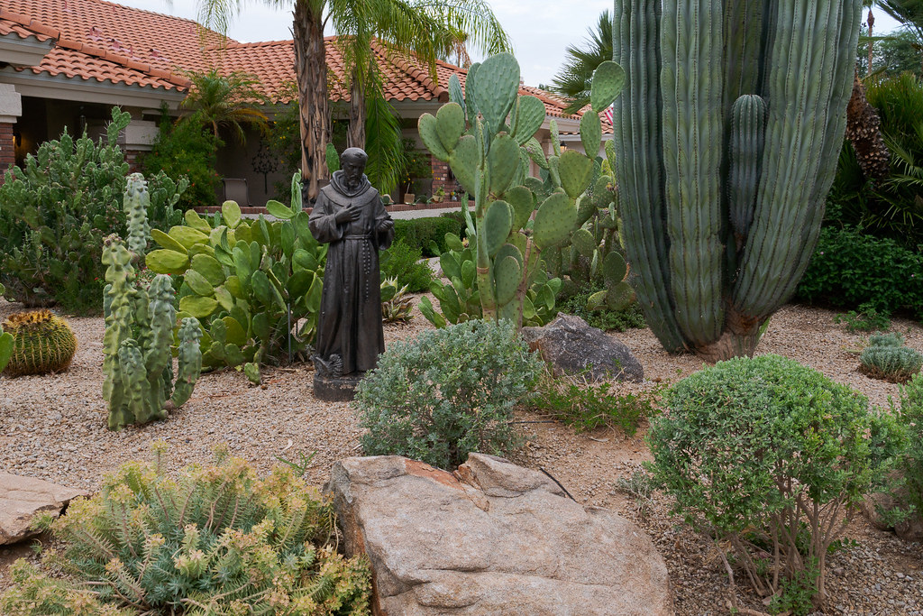A garden full of cacti in Scottsdale, Arizona