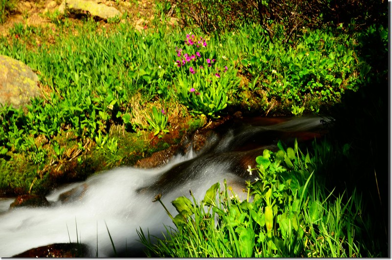 Current Creek (1)