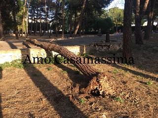 Albero cade in villa