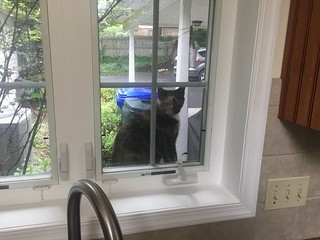 Nabi, the neighbor kitty, jumped up on the ledge outside our kitchen window to let us know she was all out of the cat food that we leave out for her!