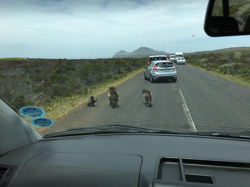 Какую живность только не встретишь на дорогах Африки!