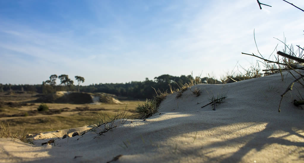 Summer in The Netherlands: what to do, what to visit? National Park Hoge Veluwe | Your Dutch Guide
