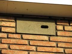 Neststeen voor Gierzwaluwen Oasisstraat