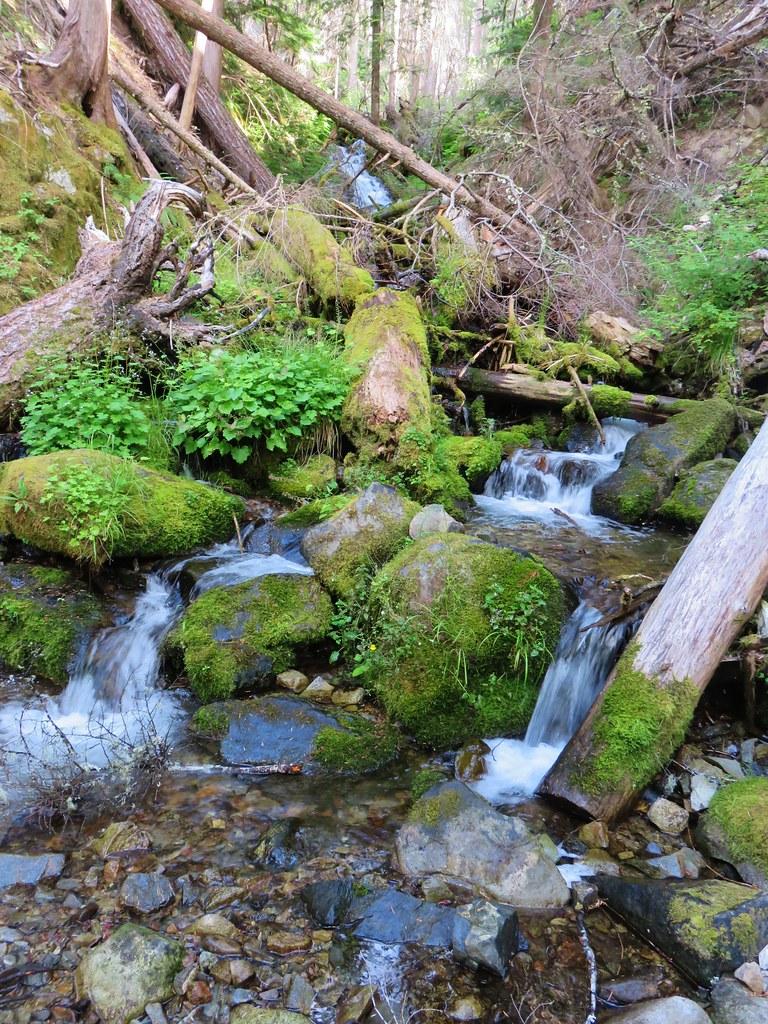 Pine Cone Creek