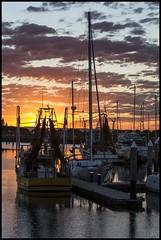 Find the sea gull in photo  Scarborough Marina-1=