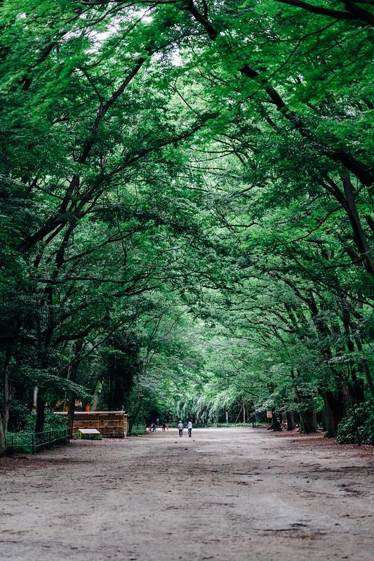Kyoto7_Shimogamo_05