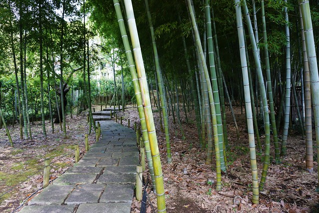 秋の岡本公園