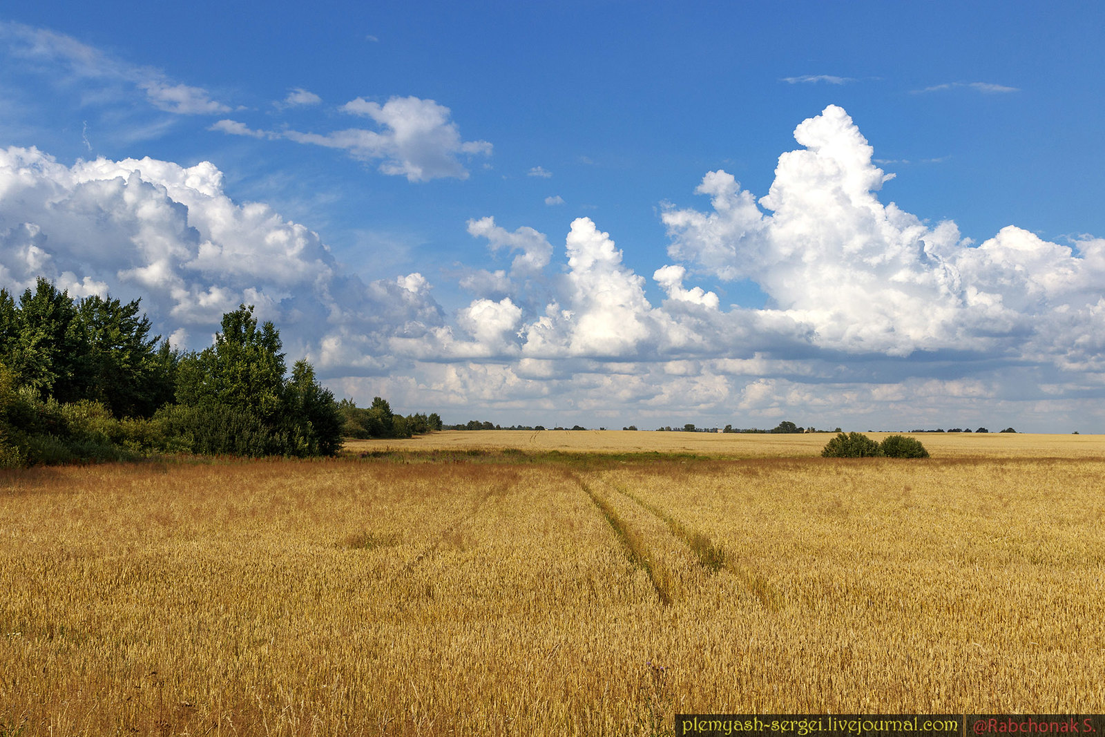 Soon a new crop