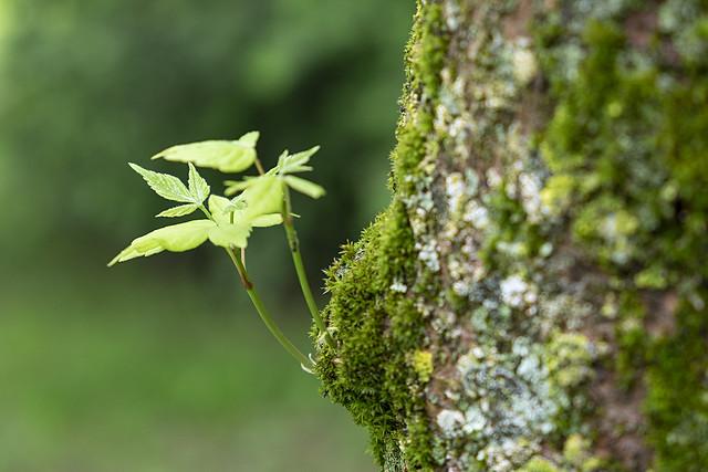 Eclosión verde