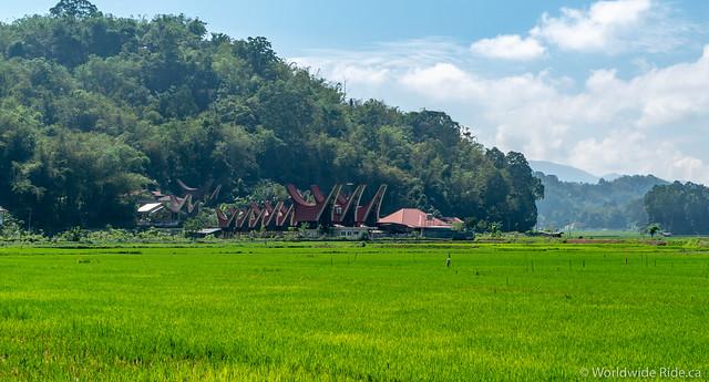 Sulawesi-44
