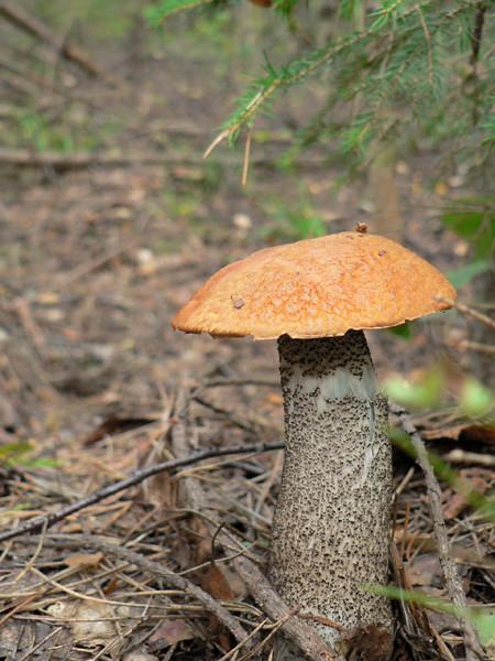 грибы портрет