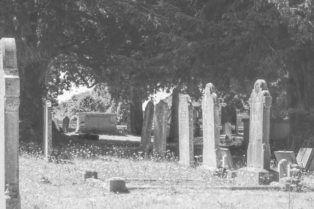 Sturminster Marshall churchyard, July