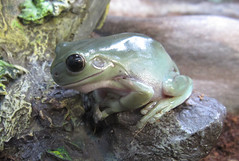 frog001