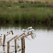 RSPB Loch Leven Nature Reserve
