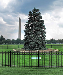 National Christmas Tree and Washington Monument-Presidents Park-DC 9013
