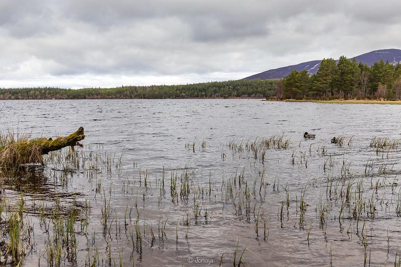Loch Morlich - Scotland 2017