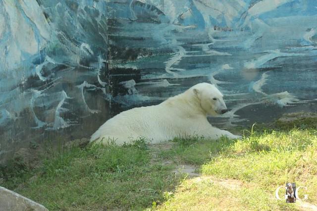 Zoo Sosto 20.06.+21.06.201812