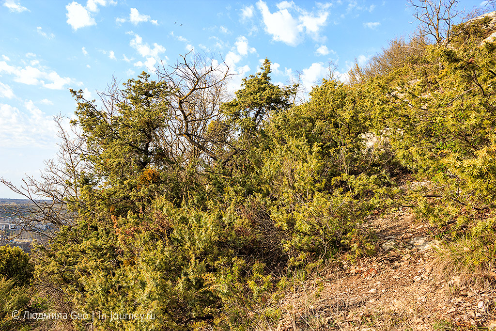 колючие кустарники в Инкерманской долине недалеко от пещер