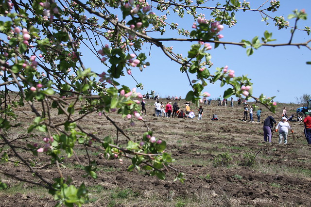 Over 400 volunteers planted trees on a degraded and eroded land field in Copceac village