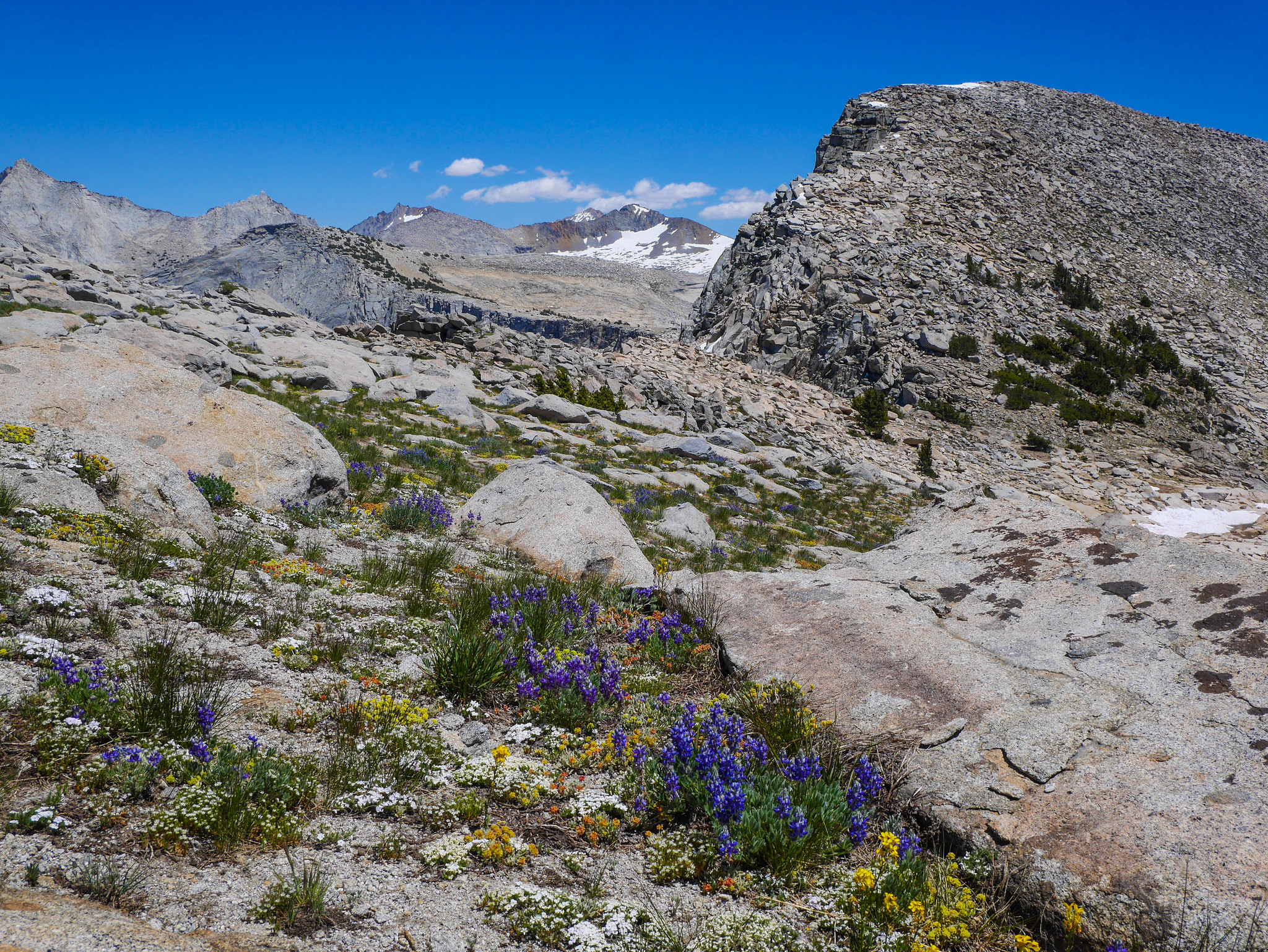 Flower gardens and Big Bird Peak