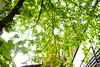 令人舒服放鬆的綠葉 | 台南十鼓文化園區