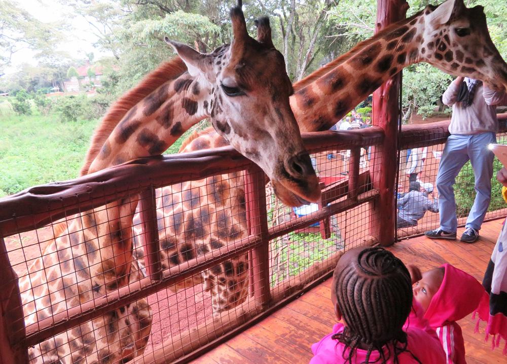giraffe-centre-kids-visit