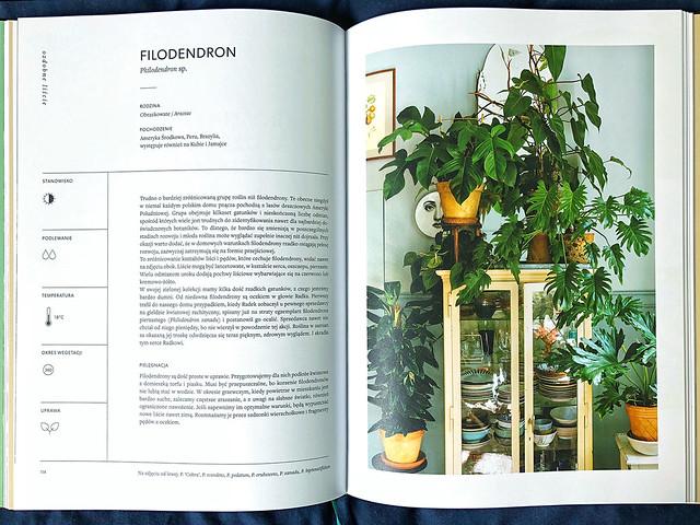 O roślinach