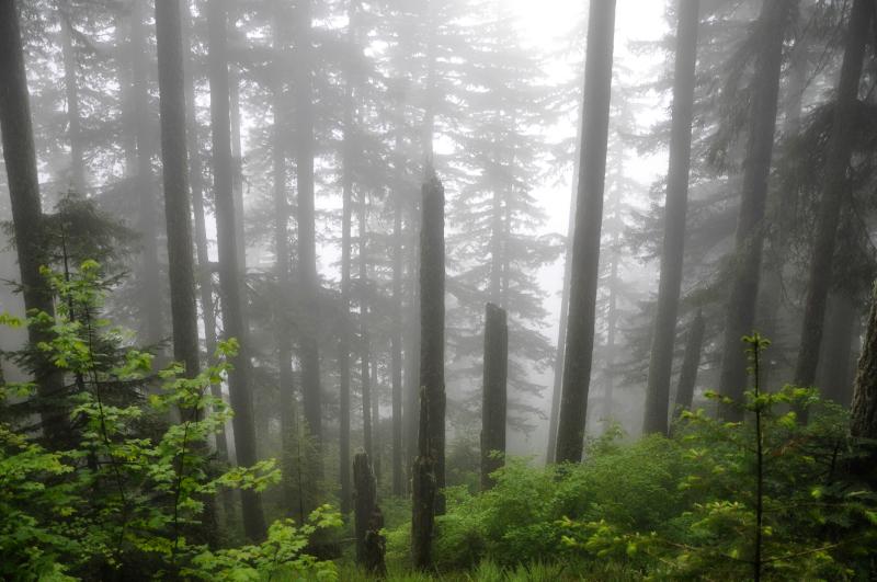 Marys Peak 6 @ Mt. Hope Chronicles
