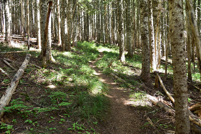 Bald Mountain Trail