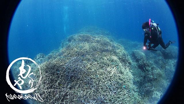 広がる珊瑚畑が美しく、エキジットを躊躇するレベルでした。