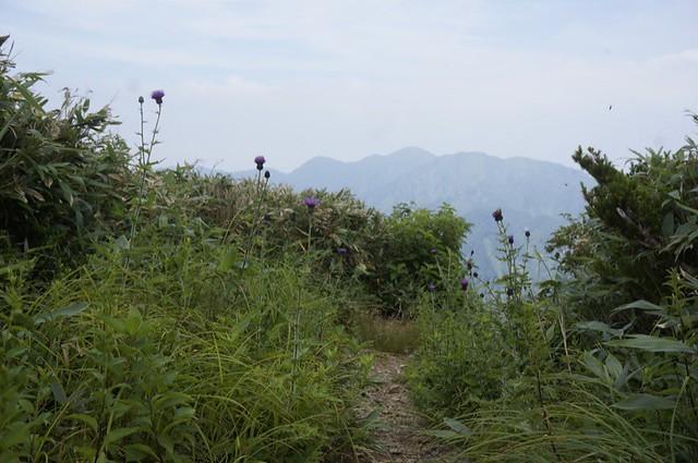 三ツ谷から登る赤兎山! その3