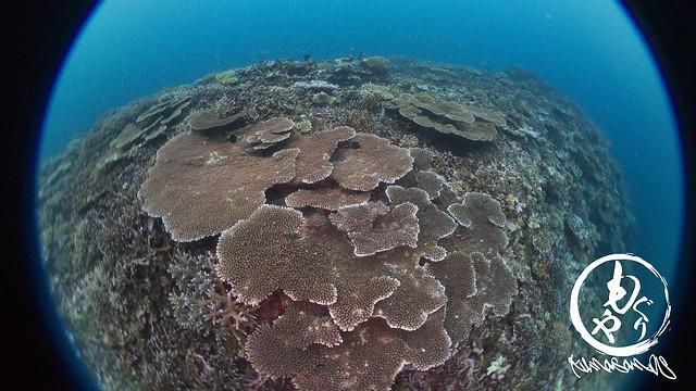 珊瑚の棚田☆