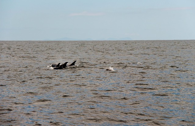 dolphins, Canon EOS 700D, Canon EF-S 18-200mm f/3.5-5.6 IS