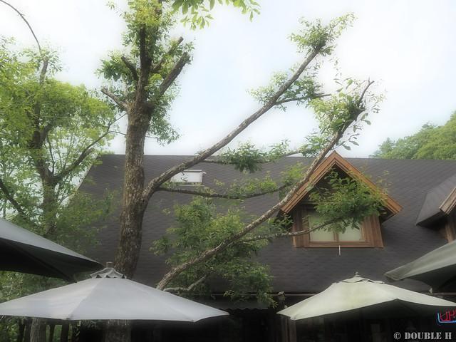 Terrace Cafe Tree House 2018-07-13 (4)
