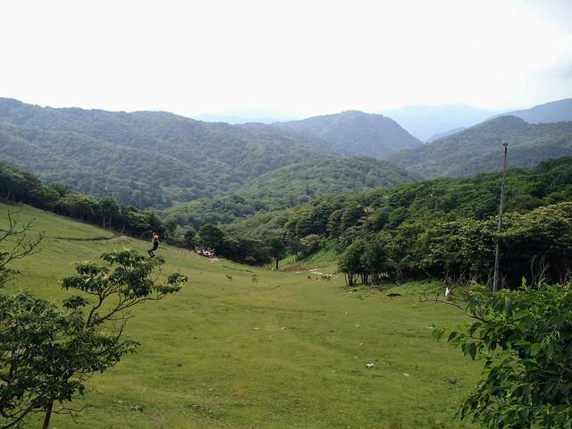 蓬莱山 琵琶湖バレイ ジップラインと鹿