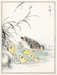 Duck illustration from Pictorial Monograph of Birds (1885) by Numata Kashu (1838-1901). Digitally enhanced from our own original edition.