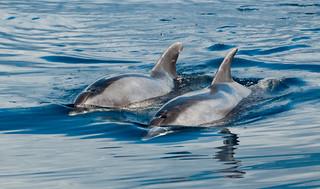 delfines mulares.jpg
