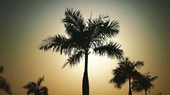 Aunque el sol esta quemandonos este verano, tambien nos da unas lindas vistas. 🌄🌴😃 . . . . . #summer #summer2018 #palmtrees #sun #sunglasses #silhouettes #shadow #photography #photographer #pictureoftheday #pics #ca