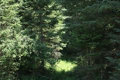 Pine Meadow RV Park