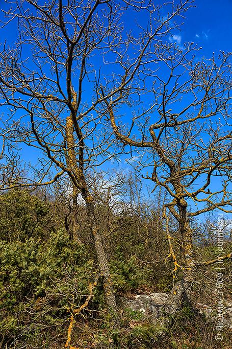 красота природы Инкерманской долины