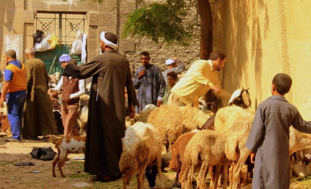 Cairo animal sellers at the City of the Dead