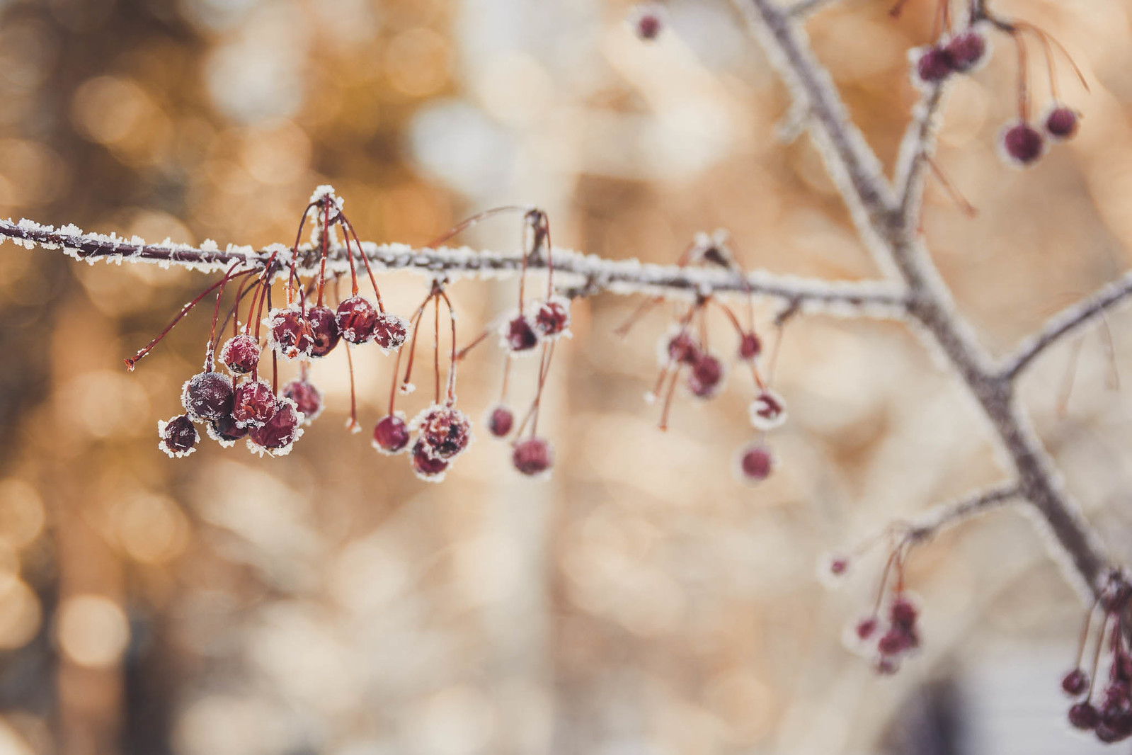 Digitrail / Aulanko talvi