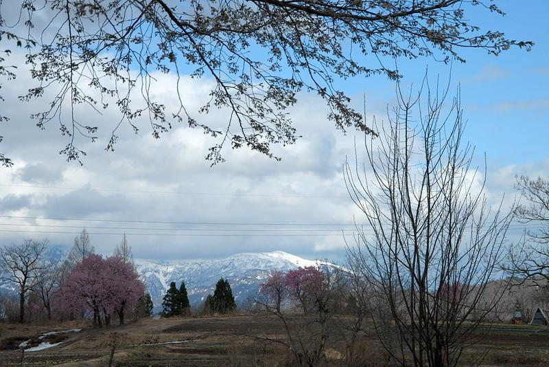 桜のある風景 #1_201804_NO2