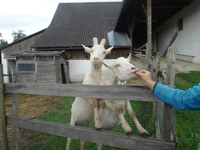 17/18 Bauernhof Sorger
