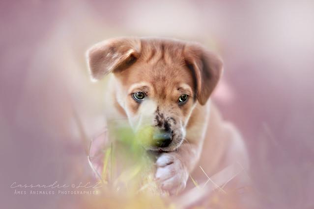 Âmes Animales Photographies - Page 2 41423696300_ee257279de_z