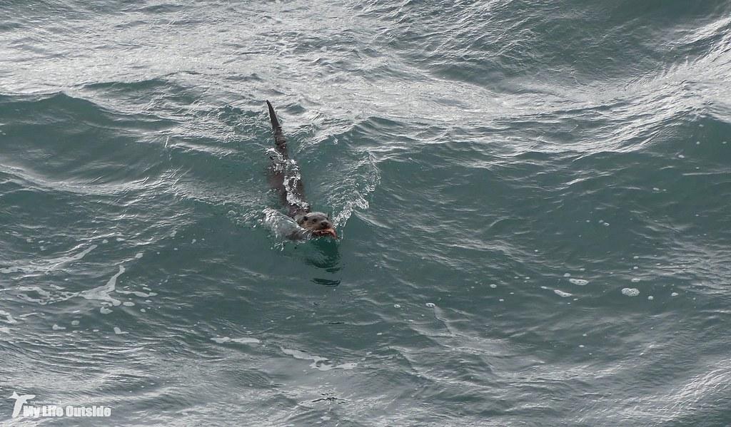 P1140198 - Otter, Isle of Mull